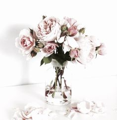 Pretty pale blush pink roses in a glass vase. Bouquet of pink roses. Flowers Garden, Planting Flowers, Garden Rose Bouquet, Fairies Garden, Pink Garden, Fresh Flowers, Beautiful Flowers, Vase Of Flowers, Rose Vase
