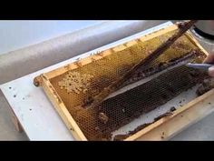 ▶ FatBeeMan 1 Minute Tip Very Easy Queen Making - YouTube
