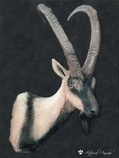 Ibex kri-kri (Capra aegagrus cretica) artificial. Fauna, Taxidermy, Mammals, Goats, Animals, Goat