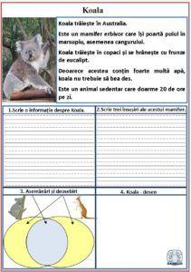 Litera k. Fișe de lucru pentru litera k. Despre koala Karaoke, Google, Double Deck Bed