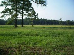 There are many ways that you can invest in real estate – from residential to commercial to multifamily… and one often overlooked way to invest is a land... http://www.floridafixeruppers.com/buying-vacant-land-for-investment-in-jacksonville/