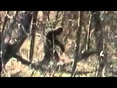 DAVE STUMPF BIGFOOT VIDEOS #95 TRAIL CAM of? | BigfootBlogger.Com