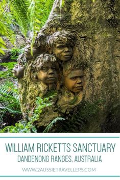 A photo tour and essential visitors information for William Rickets Sanctuary garden in the Dandenong Ranges, Victoria, Australia. Outback Australia, Visit Australia, Western Australia, Australia Travel, South Australia, Parks, Australia Tattoo, Melbourne Travel, New Zealand Travel