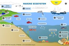 INTERACTIVE - Marine ecosystem - Explore this interactive diagram to learn more about life in the sea. Click on the different labels to view short video clips or images abou...