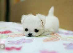 the cutest most adorable puppy in the world! i want it sooooo bad! o_O