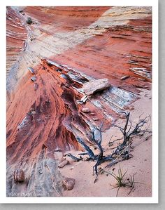 Sandstone Fins and Juniper Snag, Utah
