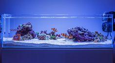 ADA 60f Reef