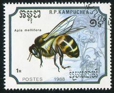 CAMBODIA CIRCA 1988: stamp printed by Cambodia, shows Bee, circa 1988 Stock Photo