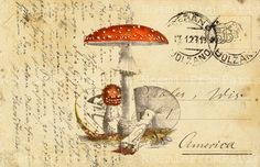 mushroom art antique sepia French Postcard vintage postcard nature poster illustration collage art print 8x10