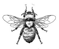 Vintage Bee Image via http://knickoftimeinteriors.blogspot.com/