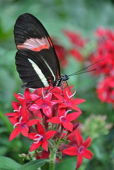 Please mister postman | A Postman delivers in Butterfly Jung… | Flickr