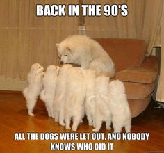 Who let the #dogs