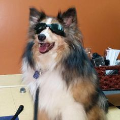 #DollyBesties Meet my buddhaful furiend Cooper who looks so cool wearing his shades. I love visiting him and his fur-siblings. His mom makes the best peanut butter cookies! ❤ Dolly
