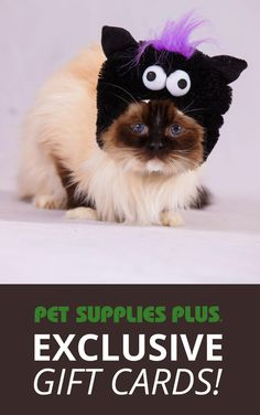 Click on the image to be one of 15,000 people to score a reward for Pet Supplies Plus valued at $5 - $250. Use yours to deck out your pet for the Halloween Pet Parade in stores Oct. 25th. First come, first served and the highest values go first.