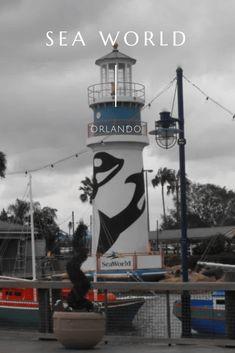 Sea World Orlando - So I Was Thinking Seaworld Orlando, Sea World, I Saw, Creative Writing, Storytelling, Paths, How To Find Out, Journey, Leaves
