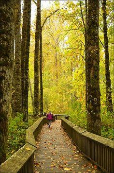 Nisqually National Wildlife Refuge Boardwalk, Washington State