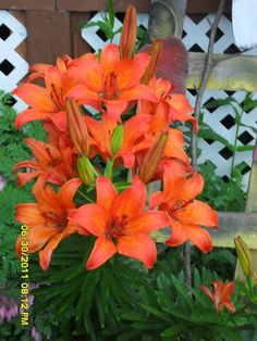 Lilies from my own garden.