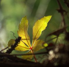 Plant Leaves, Photos, Photography, Image, Pictures, Photograph, Fotografie, Photoshoot, Fotografia