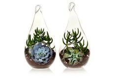 """8"""" Succulent Terrarium Duo Kit"""