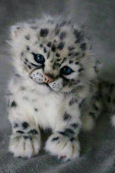 My Chachi says hi ???? http://ift.tt/2hJZvIn