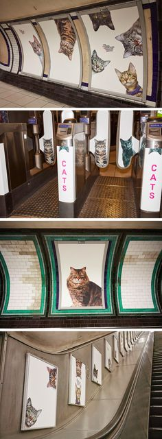 A Herd of Cats Fill Advertising Placements at a London Tube Stop for Two Weeks