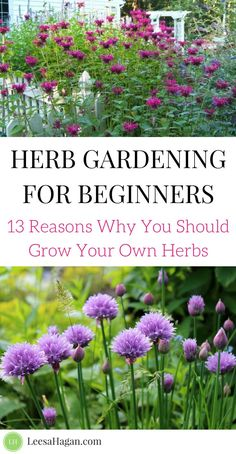 Herb Gardening for Beginners: 13 Reasons Why you should grow your own herbs | herb gardening 101, herb garden ideas, DIY herb gardening, benefits of herbs & herb gardening, medicinal herbs