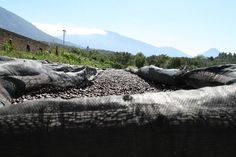5LB El Salvador Angel Mountain Unroasted Green Coffee Beans ** For more information, visit image link.
