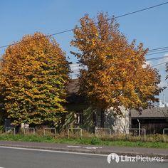 #fall  . . . . . . . . #wienerstrasse #linz #igersaustria #igerslinz #herbst #autumn #citylife #potd #scharlinz #neuewelt #urban #hood #neighborhood #view #trees