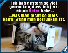 Aber manche Sachen bereut man nicht :)  Lustige Sprüche / Lustige Bilder #Humor #jux #1jux #Sprüche #jodel #lustigeBilder #lustig #lustigeSprüche #Katze #Katzen #feiern #Party #Wochenende