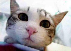 Google Image Result for http://www.pixelwit.com/blog/wp-content/uploads/2008/07/close-cat-2.jpg