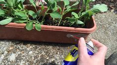 Have you ever seen this blue spray can called This stuff is made of miracles! House Cleaning Tips, Cleaning Hacks, Wd 40 Uses, Spray Can, Toilet Cleaning, Diy Cleaners, Things To Know, Things To Come, Weird And Wonderful
