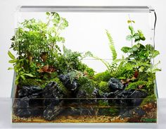 Wabi Kusa , Paludarıum , Aquascaping ,Terrarium Aquarıum Setup. pic shared by George Farmer & UK Aquatic Plant Society ................ PIN BY Aqua Poolokh
