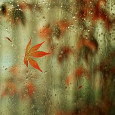 Fall rain ~ there's a reason this is my favorite season.. Sitting inside reading....