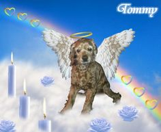 @Dexter437 cousin doggie #Tommy