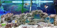 Freshwater Aquarium Fish, Aquarium Fish Tank, Saltwater Tank, Fresh Water, Google, Image, Saltwater Aquarium