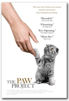 De-Clawing Cats is Animal Cruelty!  Learn more by watching this short documentary:  The Paw Project
