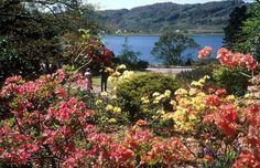 Inverewe Garden, Scotland - one of my favorite places to visit