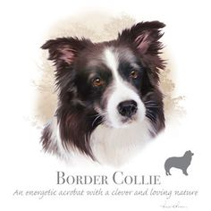 BORDER COLLIE dog fabric  - Large Picture on One Fat Quarter Fabric Panel for Quilting and Sewing