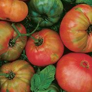 Pruning Tomatoes with Lee Reich ~ http://www.finegardening.com/Videos/