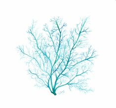 Turquoise blue Coral print, watercolor sea fan illustration - Beach home decor, Archival giclee print on fine art paper Turquoise Wall Art, Turquoise Home Decor, Coral Art, Bleu Turquoise, Watercolor Sea, Watercolor Illustration, Watercolor Paintings, Fan Coral, Coral Blue