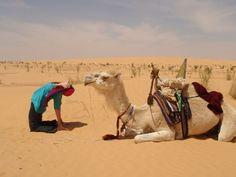 Camel. Get it?