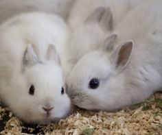 Image via We Heart It https://weheartit.com/entry/170167790 #adorable #animal #bunny #cute #funny #hilarious #soft #fluffyears
