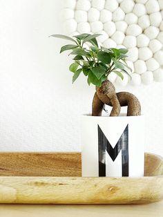 schones beliebte wohnzimmer pflanzen stockfotos images oder ddfdefaab