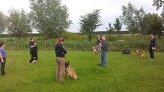 Nieuwe cursussen bij The Dog Company -