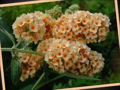 Beautiful Blooms 162 (Show Me Heaven)