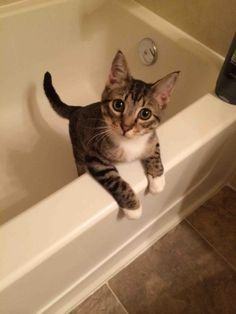 He always jumps into the tub after a shower