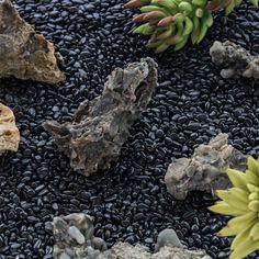 400g Black Natural Polished Pebbles 0.5cm  1cm length image 2 Terrarium Containers, Terrarium Ideas, Planter Ideas, Glass Terrarium, Terrariums, Small Potted Plants, Air Plants, Polished Pebble, Ceramic Planters