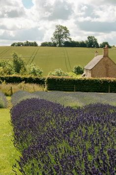 Lavender fields at Snowshill, Gloucestershire. English Country Gardens, English Countryside, The Beautiful Country, Beautiful Places, Pictures Of England, Lavender Fields, Lavander, Lavender Flowers, Lavender Crafts