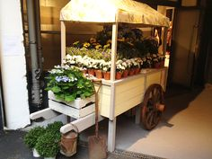 flower+carts+on+wheels | ... were greeted at press day by our beautiful old fashioned flower cart