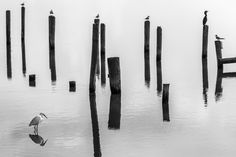 In The Still of The Day http://mabrycampbell.com #photography #blackandwhite #mabrycampbell #pilings #egret #bird #water #texas #image #photo
